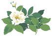 PSD花纹40068,PSD花纹4,花纹图案,牡丹 绿叶 拥护
