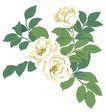 PSD花纹40069,PSD花纹4,花纹图案,花色 自然 样式