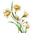 PSD花纹50059,PSD花纹5,花纹图案,草叶 花草 茂盛