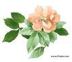 PSD花纹60098,PSD花纹6,花纹图案,绿叶 陪衬 秀花