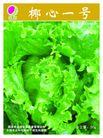 农业0002,农业,行业平面模板,卷心菜 蔬菜 青菜 有机食品 叶子