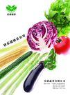 农业0005,农业,行业平面模板,茄子 黄瓜 玉米 蔬菜 辣椒