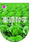 农业0011,农业,行业平面模板,秦源种子 菜地 蔬菜