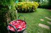 SPA Style0001,SPA Style,休闲,锅子 红色 花瓣