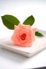 新生活0066,新生活,休闲,粉色玫瑰