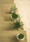 植物与空间0152,植物与空间,生活,绿色盆栽