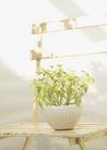 植物与空间0161,植物与空间,生活,阳光洒下