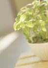 植物与空间0162,植物与空间,生活,阳光照射
