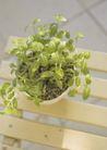 植物与空间0163,植物与空间,生活,一盆盆栽