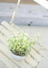 植物与空间0164,植物与空间,生活,居室盆栽