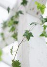 植物与空间0165,植物与空间,生活,绿叶