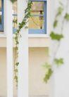 植物与空间0166,植物与空间,生活,藤蔓