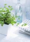 植物与空间0171,植物与空间,生活,雅居 盆栽 毛巾