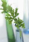 植物与空间0173,植物与空间,生活,玻璃瓶 装满水 嫩绿叶片