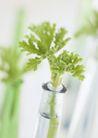 植物与空间0174,植物与空间,生活,绿色空间 瓶口 小植物
