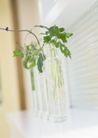 植物与空间0175,植物与空间,生活,墙角 玻璃容器 绿色植物