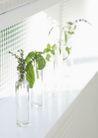 植物与空间0176,植物与空间,生活,白天 透明容器 小株植物
