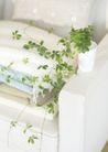 植物与空间0177,植物与空间,生活,白沙发 靠枕 长藤植物