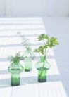 植物与空间0181,植物与空间,生活,花枝 植物