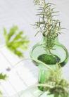植物与空间0182,植物与空间,生活,玻璃杯 装饰物