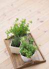 植物与空间0183,植物与空间,生活,盆栽 木托盘