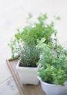 植物与空间0184,植物与空间,生活,盆栽 植物