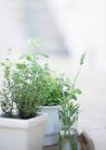 植物与空间0185,植物与空间,生活,青叶 盆景