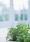 植物与空间0186,植物与空间,生活,青叶 花草