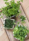 植物与空间