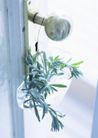 植物与空间0190,植物与空间,生活,
