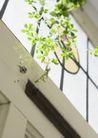 植物与空间0191,植物与空间,生活,藤蔓