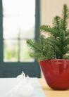 植物与空间0193,植物与空间,生活,小盆栽