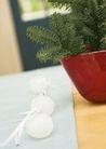 植物与空间0194,植物与空间,生活,居室植物