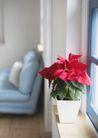 植物与空间0197,植物与空间,生活,居室里的花朵