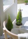 植物与空间0199,植物与空间,生活,居室盆栽植物