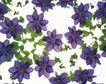 神奇球体0100,神奇球体,静物,小花 紫色 花案