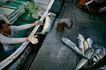 台湾生命力0023,台湾生命力,文化,渔船 渔民 打渔