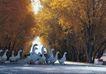 西藏风光0015,西藏风光,文化,林荫道 家鹅 驱赶
