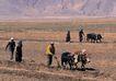 西藏风光0020,西藏风光,文化,耕田 郊野 农忙