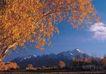 西藏风光0026,西藏风光,文化,秋季 枯叶 西藏风光