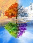 专辑Ⅰ0240,专辑Ⅰ,设计密码,雪花飞舞 倒影 彩色树