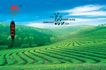 专辑Ⅰ0273,专辑Ⅰ,设计密码,茶园 茶庄 绿茶 书法字 清香 普洱茶 绿色庄园 蓝天 白云