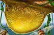 专辑Ⅱ0194,专辑Ⅱ,设计密码,蜜蜂 蜂窝 巢穴