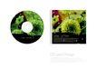 包装0052,包装,东方设计元素,光盘盒 绿色 花朵