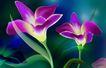 古典花卉底纹0005,古典花卉底纹,中国古典画,