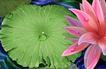 古典花卉底纹0011,古典花卉底纹,中国古典画,荷叶 荷花 露珠