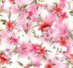 古典花卉底纹0024,古典花卉底纹,中国古典画,花瓣 洁白 饱含