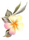 古典花卉底纹0025,古典花卉底纹,中国古典画,轻描 局部 空白