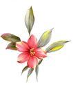 古典花卉底纹0026,古典花卉底纹,中国古典画,染色 工笔画 水彩