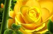 古典花卉底纹0061,古典花卉底纹,中国古典画,树干 刺 黄玫瑰